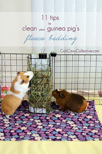 how-do-you-clean-your-guinea-pigs-fleece-bedding-before-the-wash